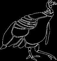 Rare Bird 101